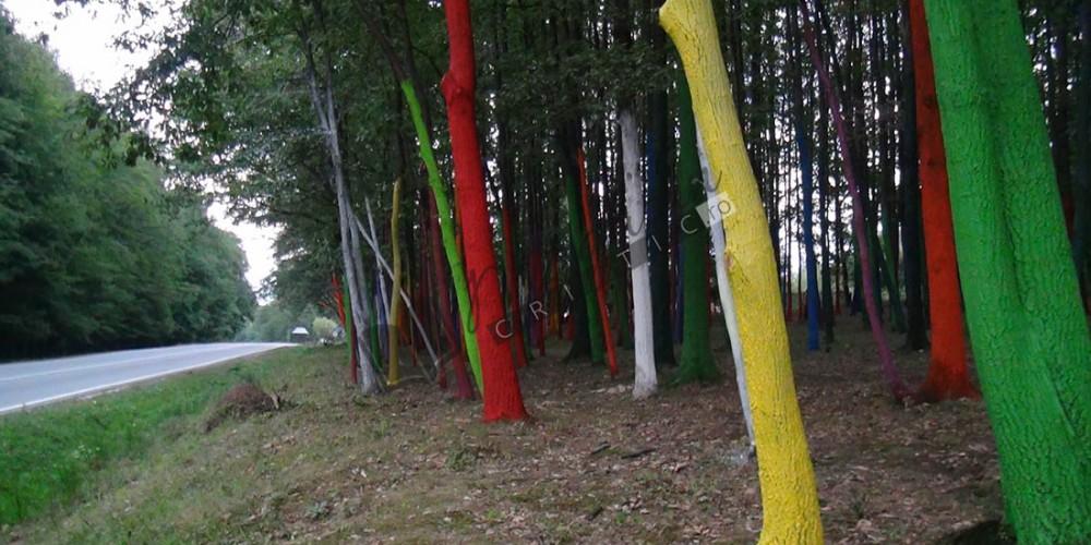 Pădurea colorată3